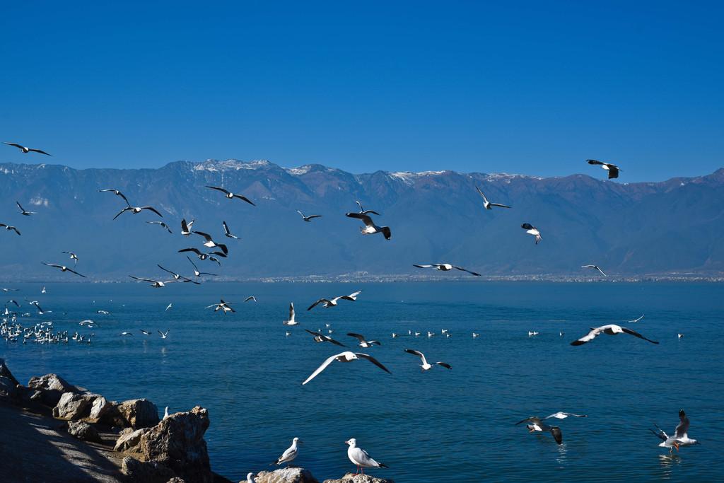 壁纸 动物 风景 鸟 鸟类 摄影 桌面 1024_683