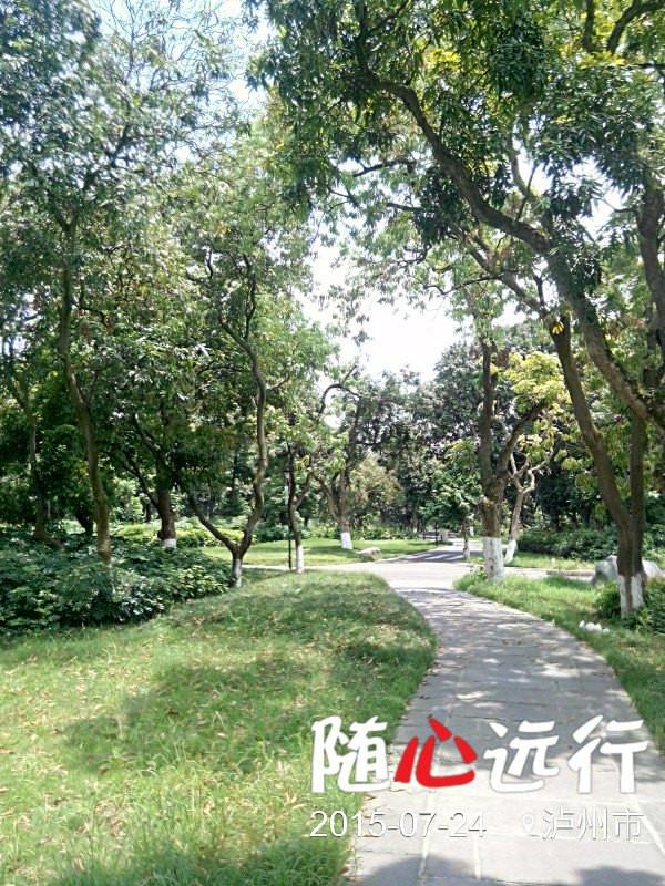 醉美酒城——张坝桂圆林风景区
